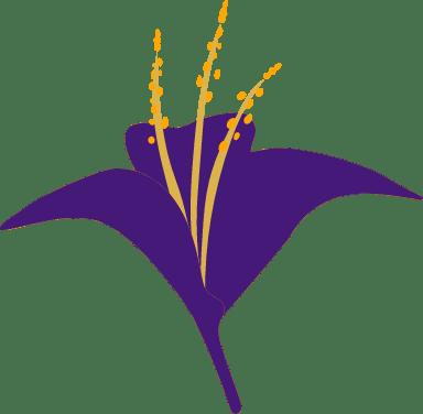 Nymphaea Flower