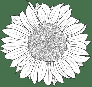 Big Sunflower 02
