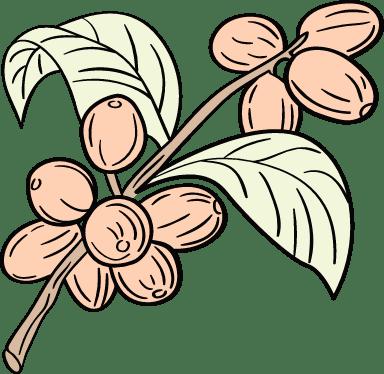 Coffee Bean Branch
