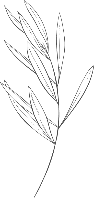 Stemmed Pointy Leaves