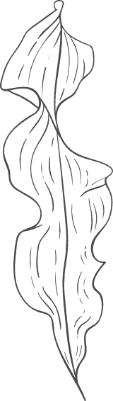 Long Frilly Leaf