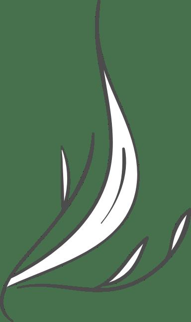 Pointed Long Leaf
