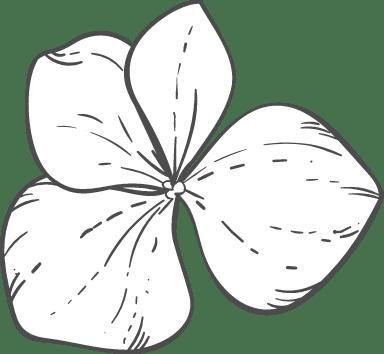 Four Uneven Petals