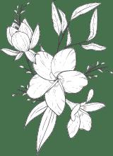 Floral Depiction