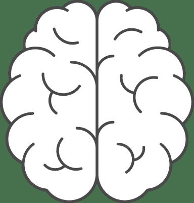 Brain Cerebellum