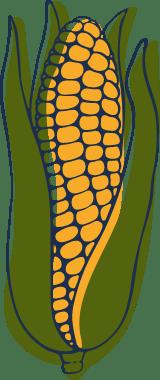 Sketched Corn