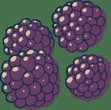 Sketched Blackberries