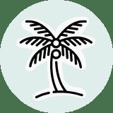 Basic Coconut Palm