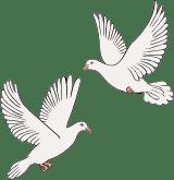White Wedding Doves