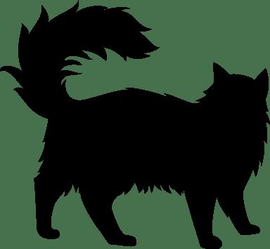 Roaming Cat