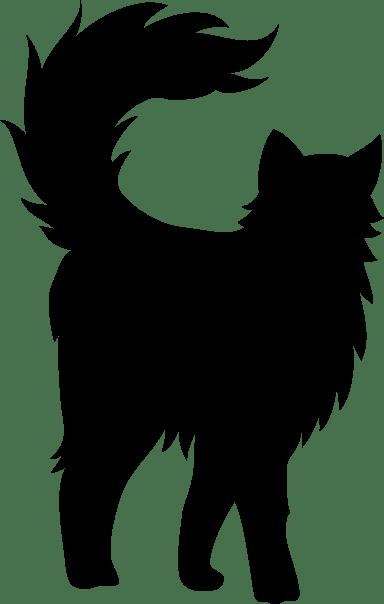 Aloof Cat