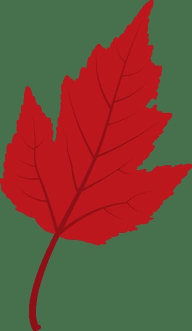 Small Viburnum Leaf