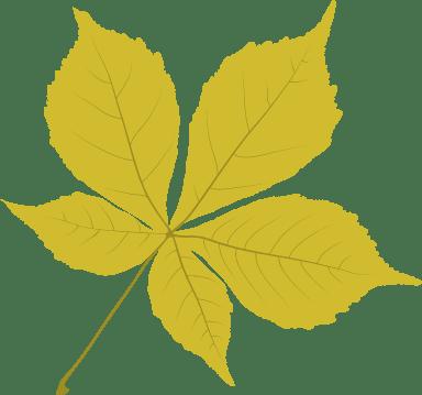 Bright Chestnut Leaf