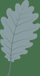 Plain Oak Leaf