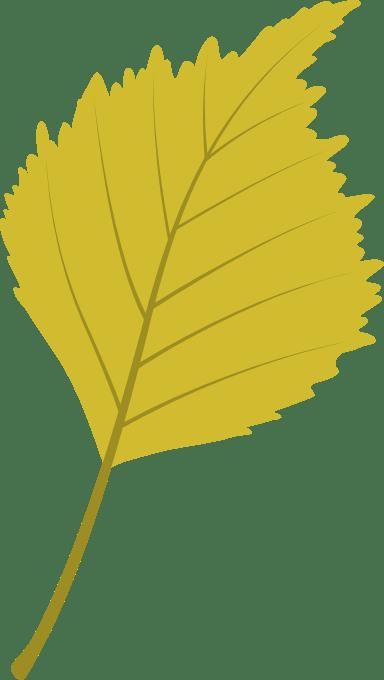 Bright Birch Leaf