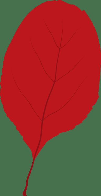 Small Alder Leaf