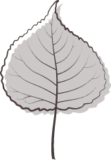 Gray Poplar Leaf