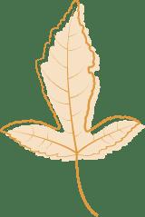 Orange Ash Leaf