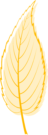 Yellow Willow Leaf
