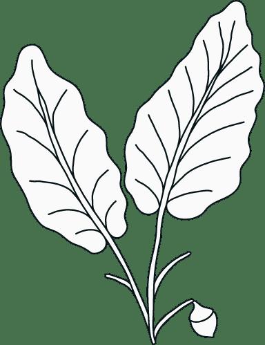 Illustrated Leaves