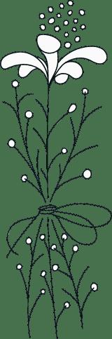 Illustrated Perennial