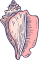 Marine Conch Shell