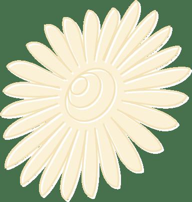 Pale Daisy