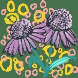 Painted Echinacea