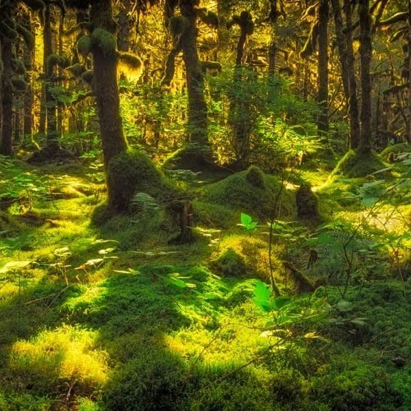 A moss covered forest near Kodiak, Alaska.