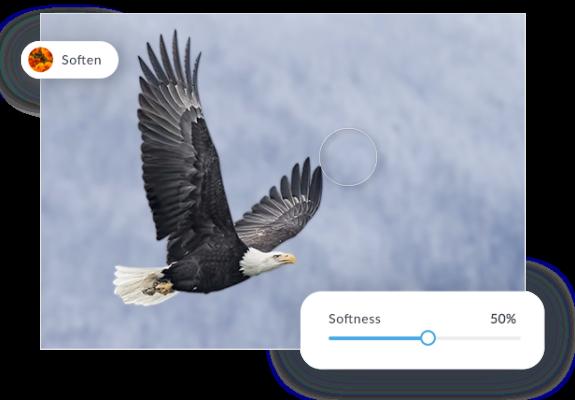 blur background eagle