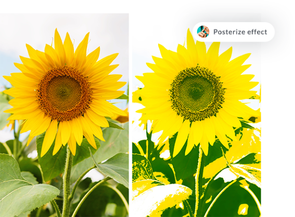Sunflowers before and after PicMonkey's posterize effect