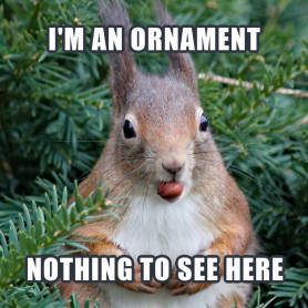 Squirrel in bushes meme template at PicMonkey