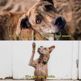 Two dogs with funny text meme template at PicMonkey